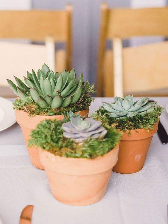 a rustic and natural wedding centerpiece of simple terra cotta pots with moss and succulents is a cute idea