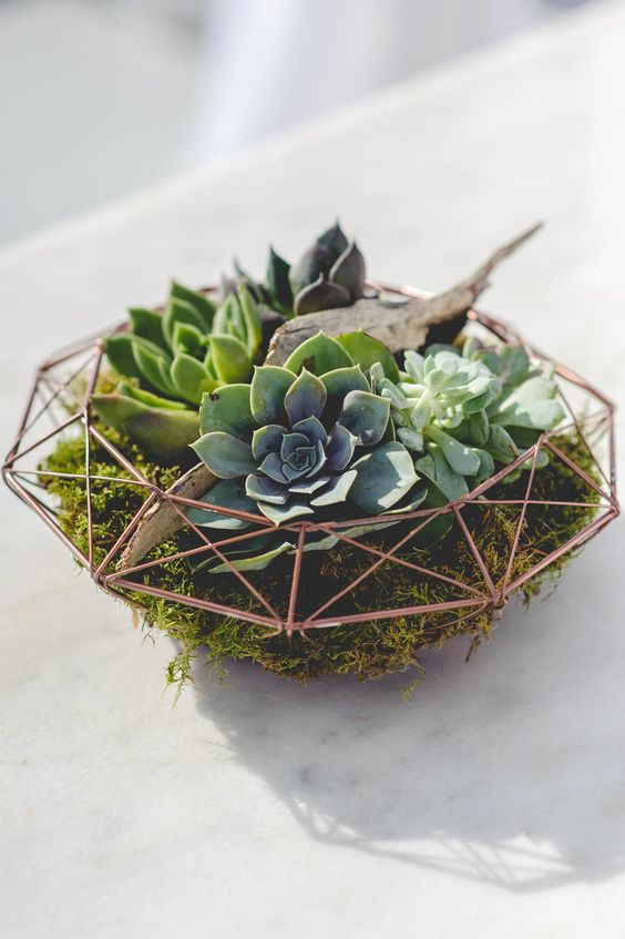 a chic geometric terrarium with moss, driftwood and succulents for a modern and bold wedidng centerpiece