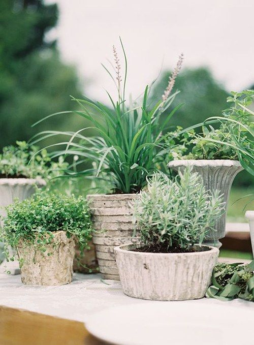 a unique wedding centerpiece of several concrete planters and various types of greenery