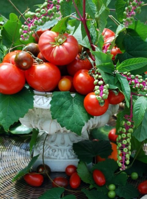a white urn with tomatoes, berries and leaves for a harvest fall or farm to table wedding