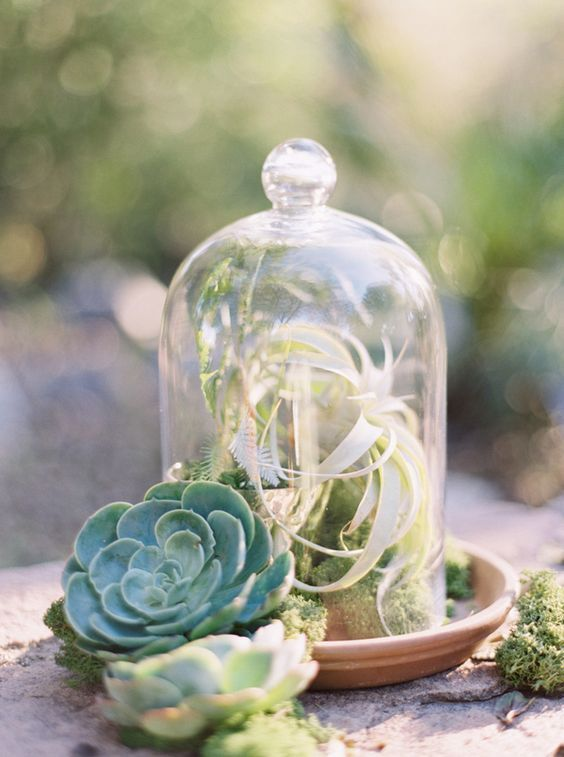 an air plant ina  cloche and some succulents around for a chic and fresh centerpiece