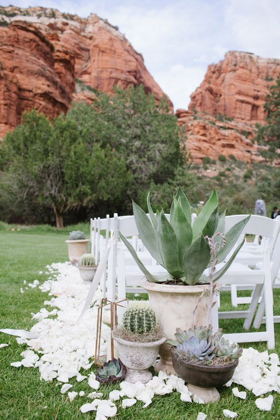 oversized cacti and succulents in pots and white petals for accenting and decorating a wedding ceremony space
