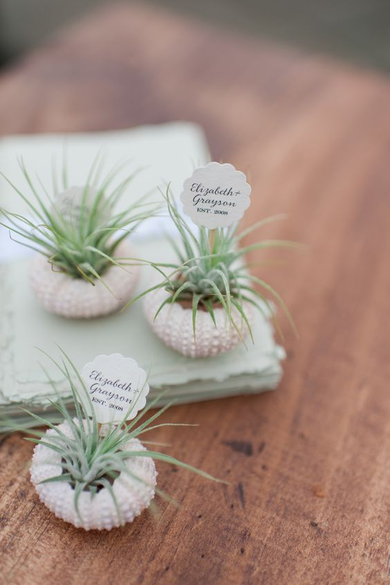air plants in urchin shells with markers are amazing for a spring beach wedding or for a coastal one