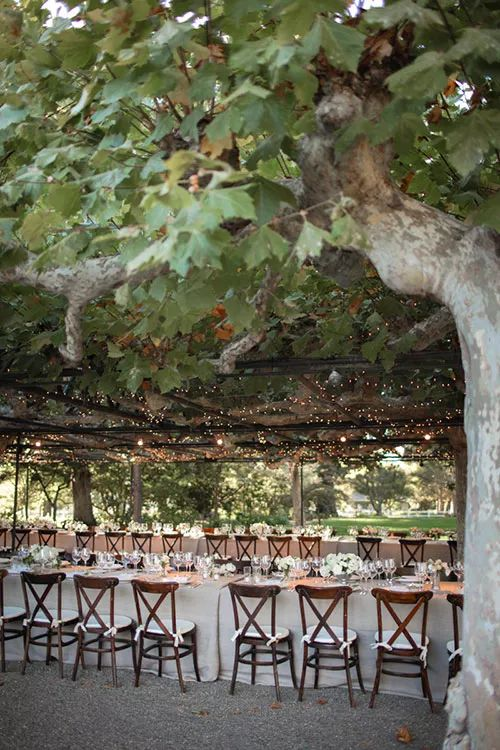 a cool and lovely wedding reception with vines and lights, elegant tables dressed in white is a very pretty idea