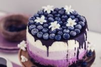 an ombre blueberry cheesecake with mascarpone and biscuits, with a cocoa baked bottom layer and fresh blooms and berries on top