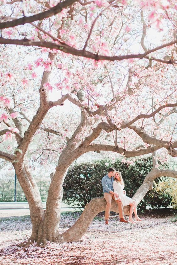 sit on a blooming tree to make your spring engagement more season-embracing