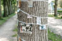 a family tree made of a real tree wrapped with rope and with colorful family pics on it