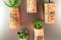 succulents planted into wine corks are a cool idea for wedding favors, you may also go for air plants
