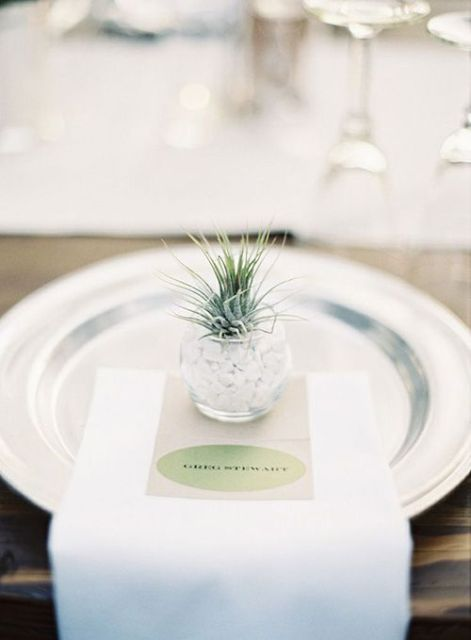 Picture Of Original Ideas To Incorporate Airplants Into Your Wedding 18