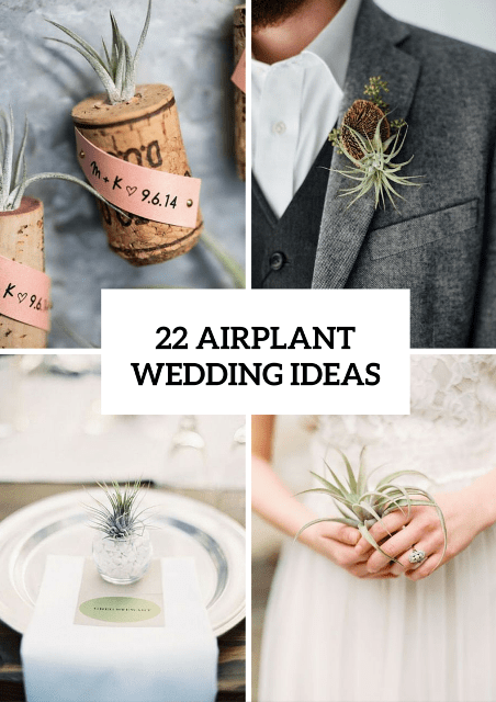 22 Original Ideas To Incorporate Airplants Into Your Wedding