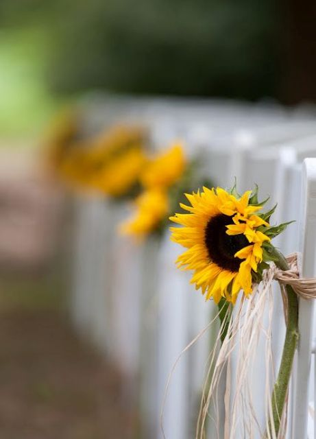 sunflowers decorating the aisle is a cool idea for a summer or early fall wedding with a rustic feel
