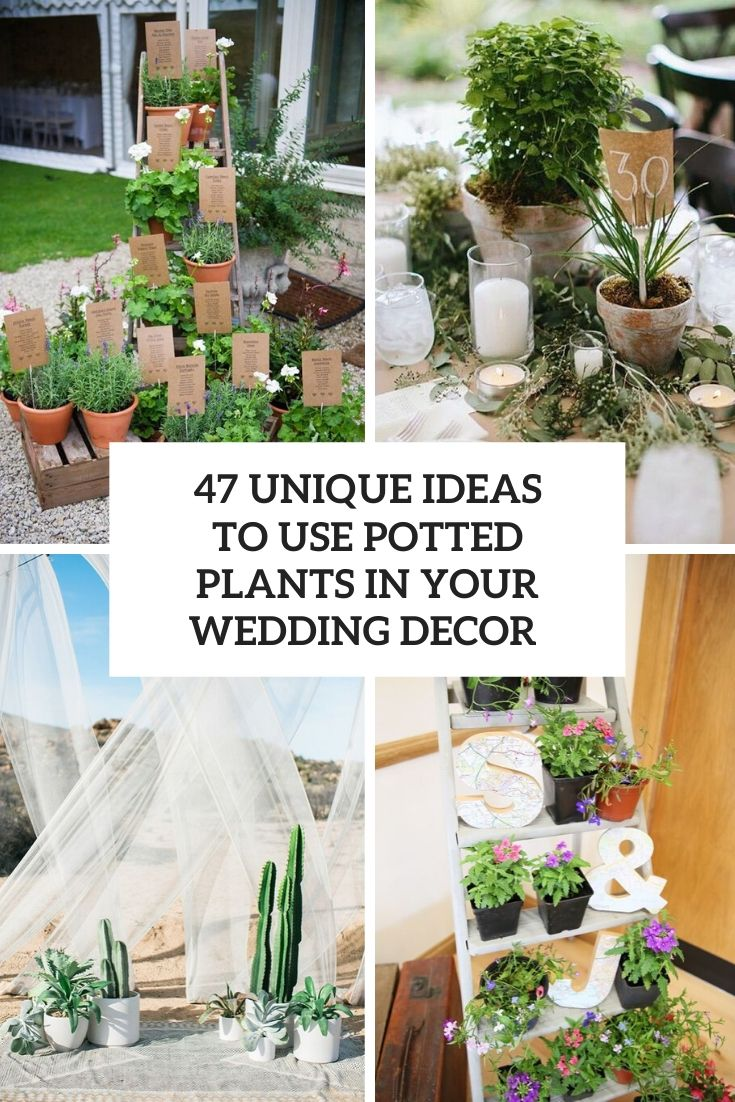 How To Use Potted Plants In Your Wedding Decor: 47 Unique Ideas