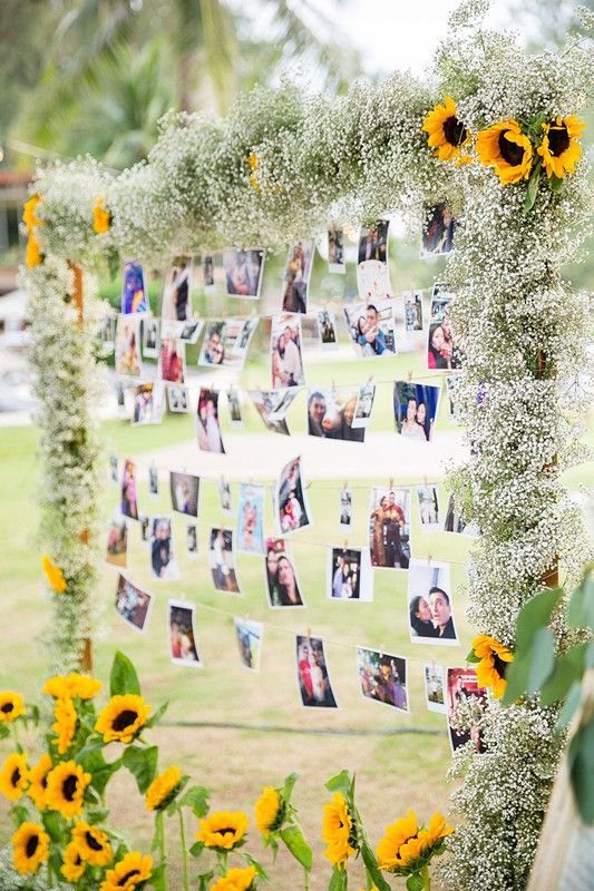 a cool and homey wedding decoration - an arch covered with baby's breath and sunflowers and lots of photos