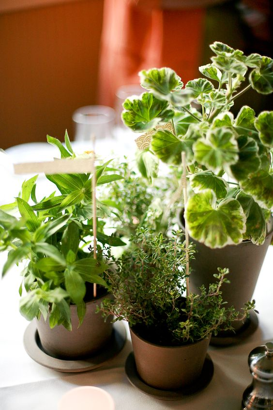 a wedding centerpiece of potted greenery with marks is a cool idea for a modern wedding