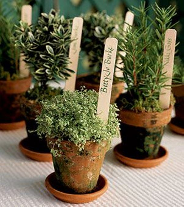 marked potted greenery is a cool sustainable wedding favor idea