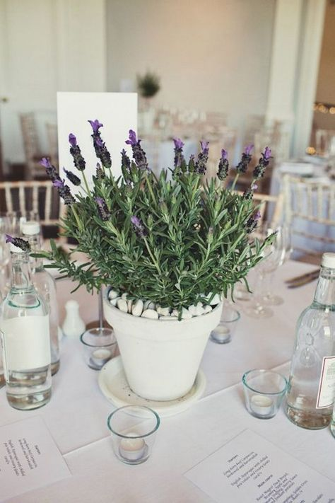 potted flowers is a cool and simple wedding centerpiece for a modern and fresh wedding