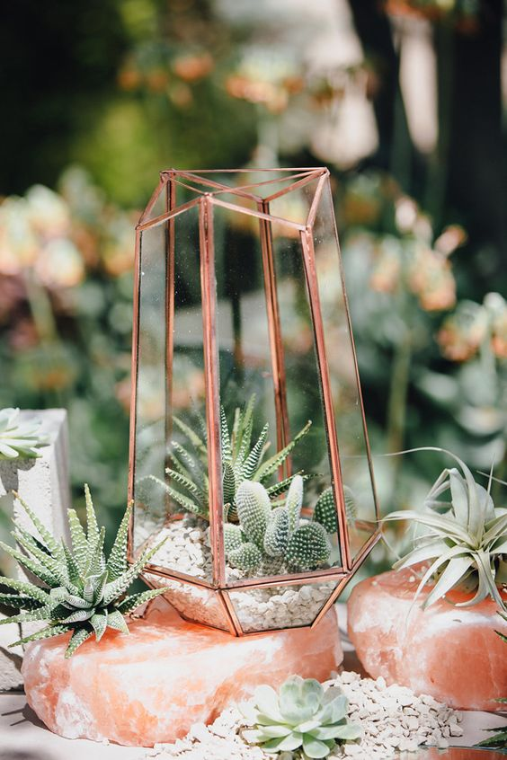 cacti and succulent terrariums for decor