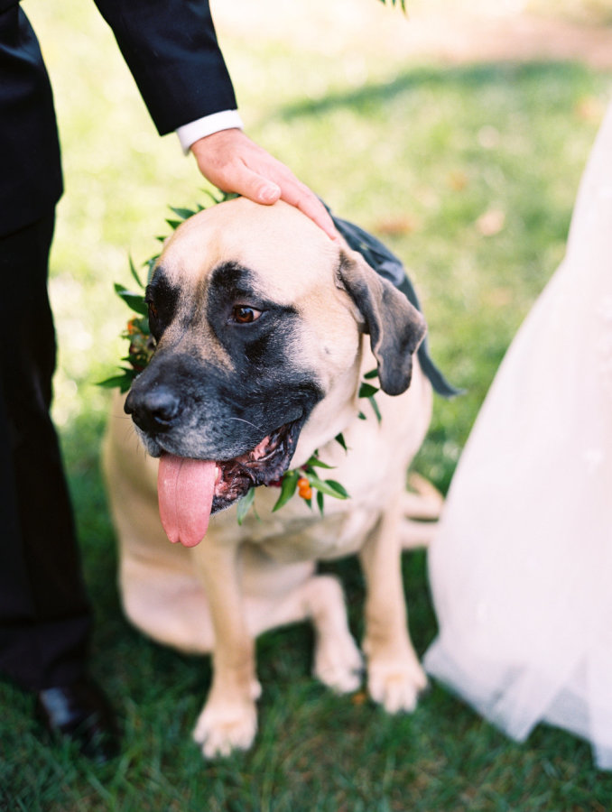 Buffy the Mastiff appeared at his parents ceremony