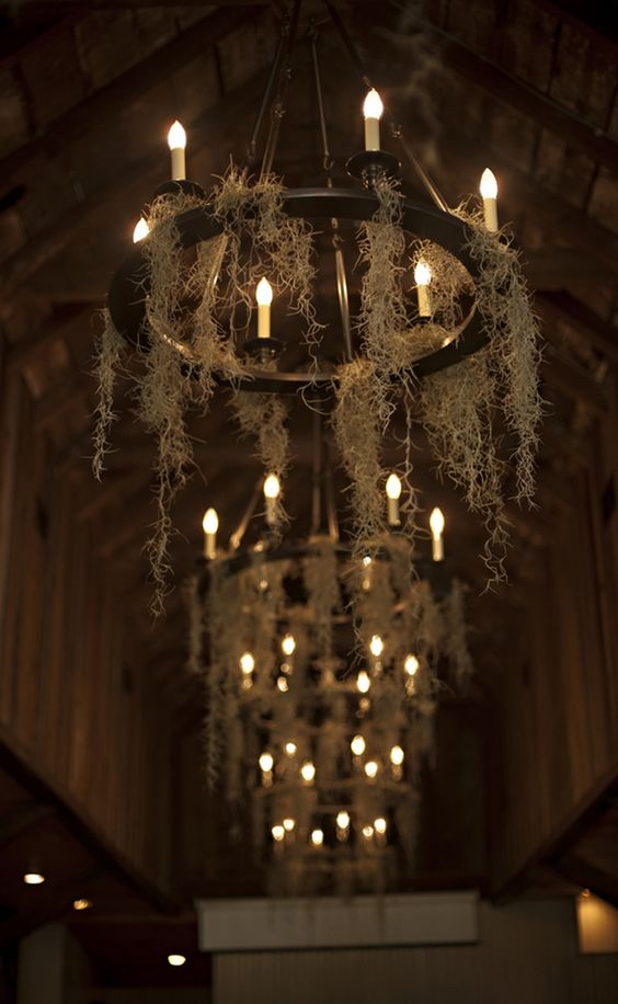 antique-styled chandeliers, bulbs remind of candles and airplants instead of spiderweb