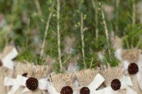 26 tree saplings in burlap sacks with pinecone bows