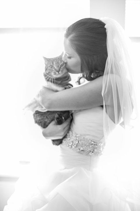bride kissing her cat