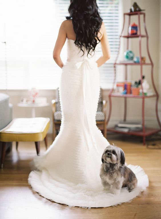 let your doggie sit on your wedding dress train