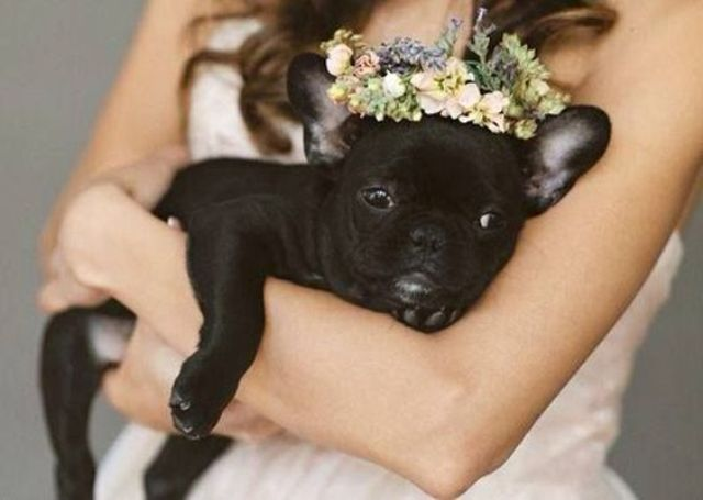 hug your pup on your big day