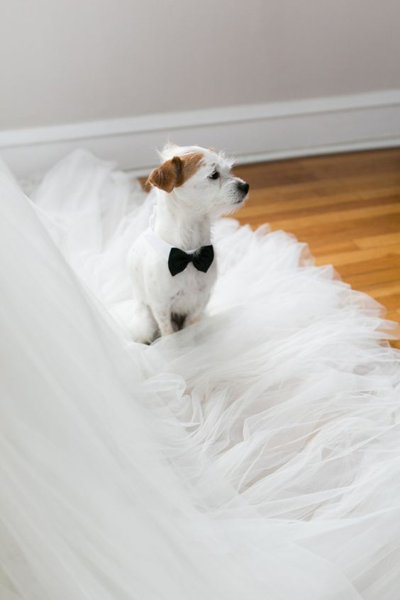 little furry friend sitting on the wedding dress