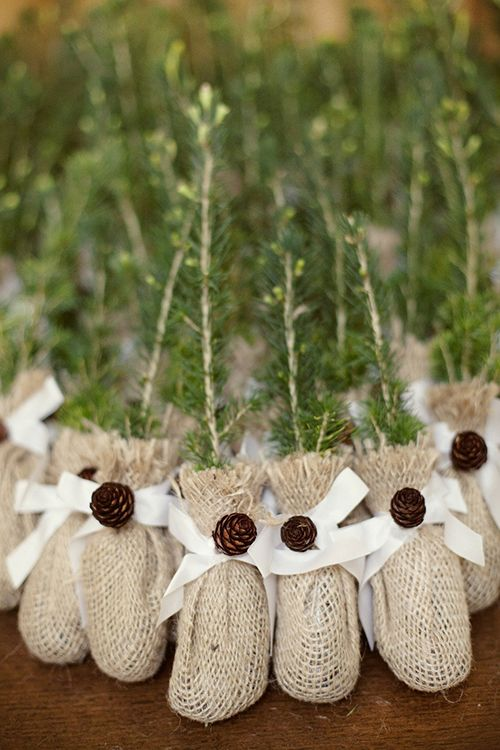 tree saplings wrapped in burlap and tied with twine are eco-friendly wedding favors