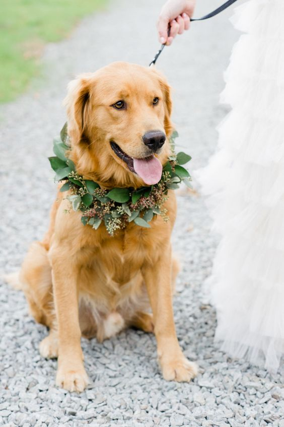 a eucalyptus wreath will not hurt your dog