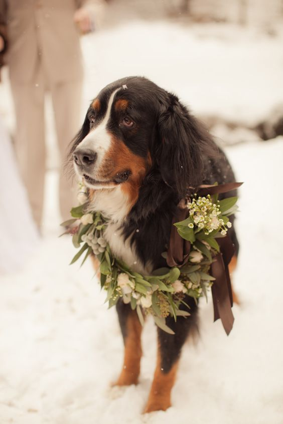 cute floral wreath or collar for your pup