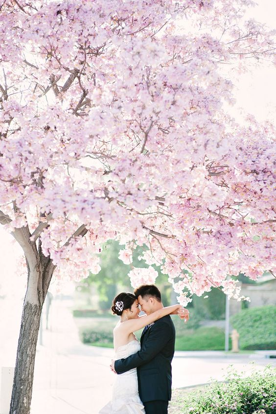 cherry blossoms are amazing for taking pics, they will be incredibly romantic