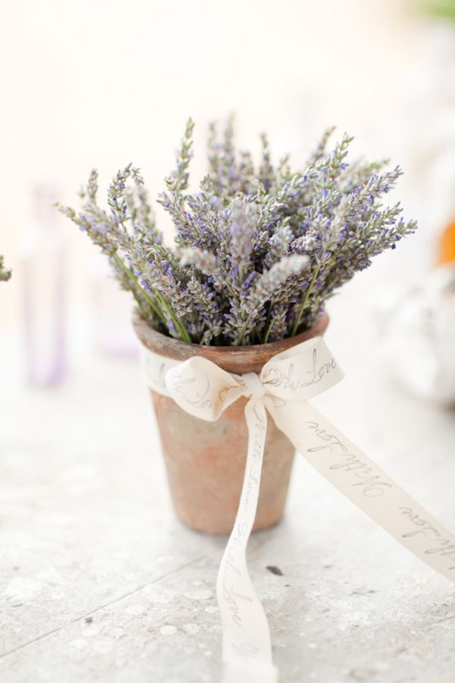 lavender in a shabby pot with a ribbon bow looks wow