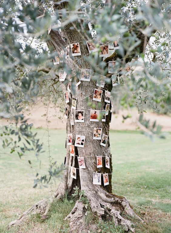 cover a tree with your family pics