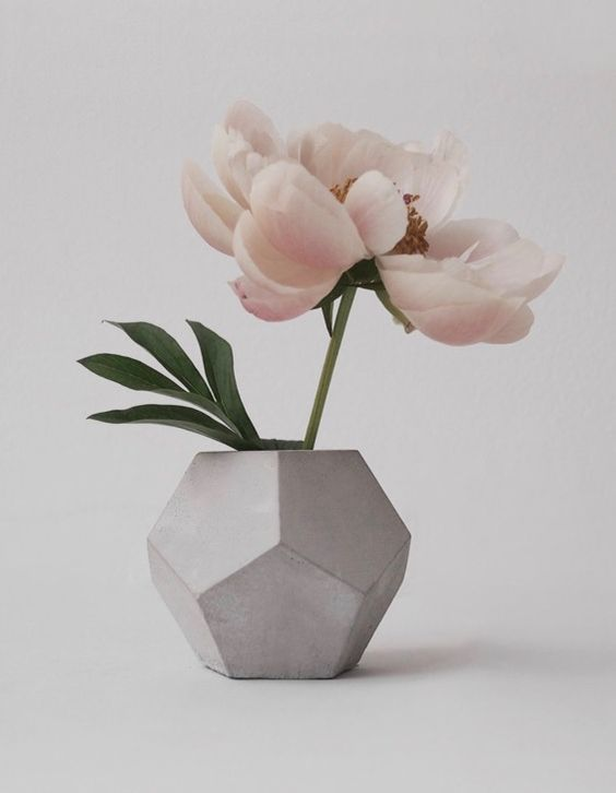 33 faceted concrete vase with a single large bloom