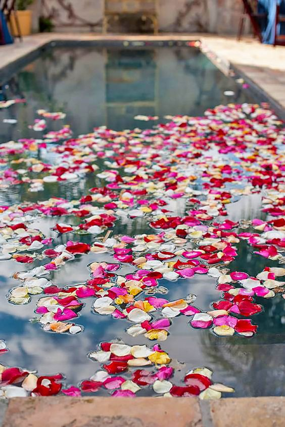 bold flower petals floating in the pool