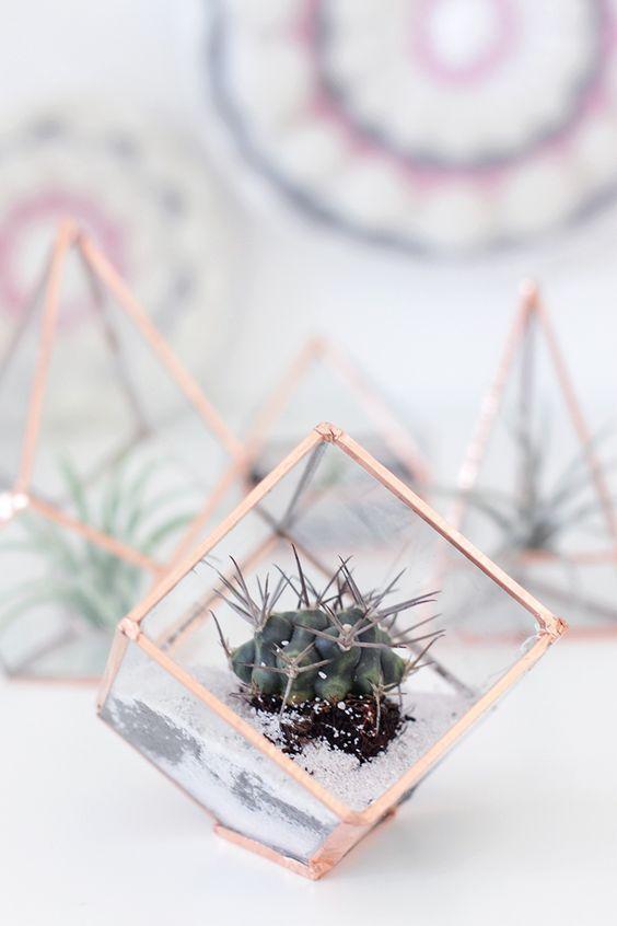 small cube terrarium with a cacti