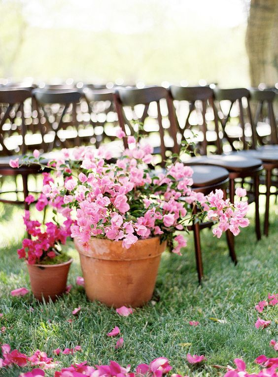 pink and fuchsia potted flowers will be a great idea for a colorful summer wedding