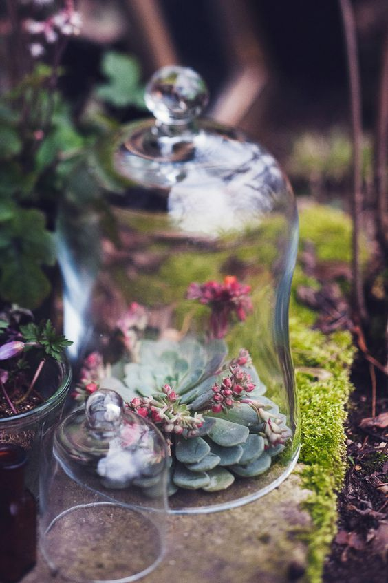 a cloche with a large succulent and some wildflowers