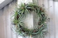 21 an air plant wreath should be misted with water sometimes