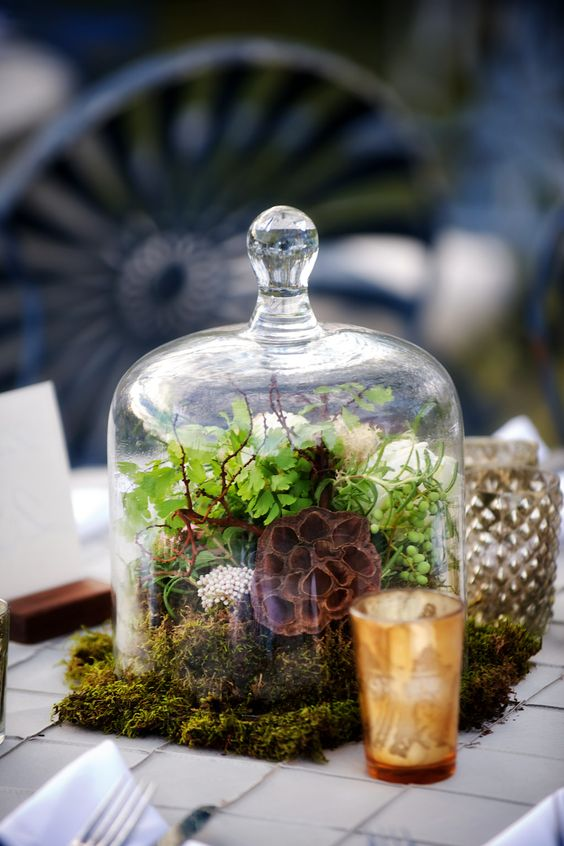 a cloche with moss, greenery and a lotus