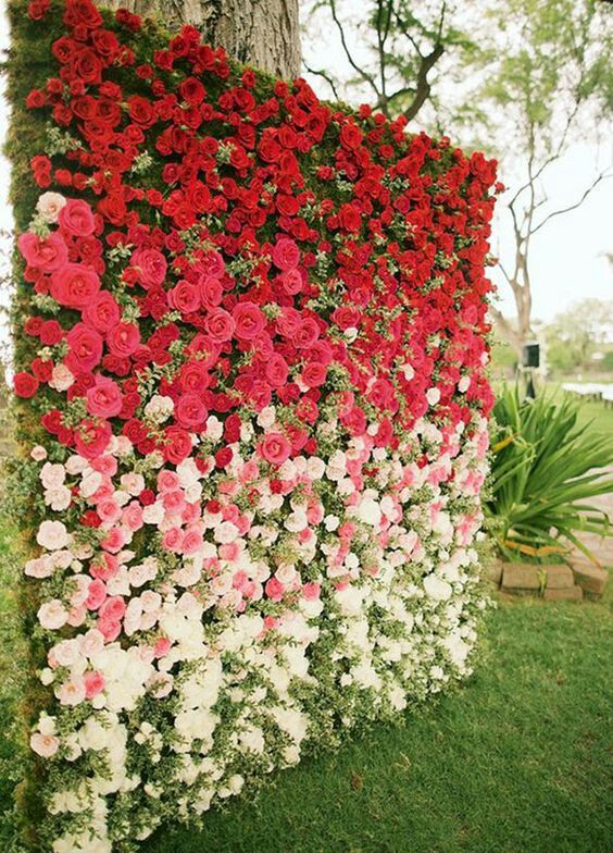 ombre rose wall from red into white
