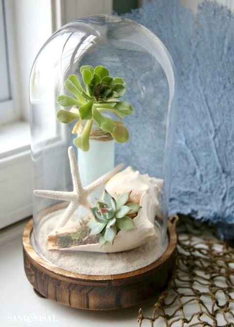 succulents and a star fish and a shell terrarium for a beach wedding