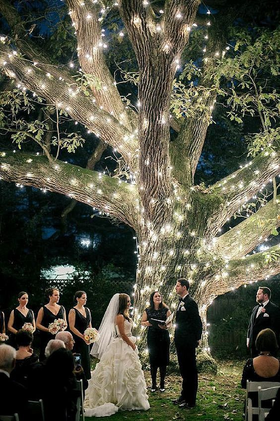 the whole tree covered with string lights is a great idea for any ceremony