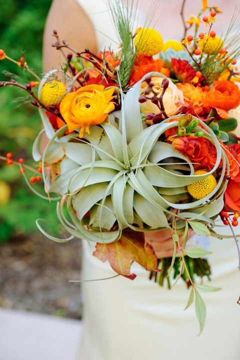 bold fall bouquet with billy balls, air plants and orange ranunculus