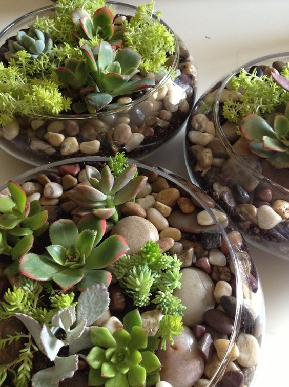 a glass bowl with succulents and pebbles is a trendy idea because succulents are super hot