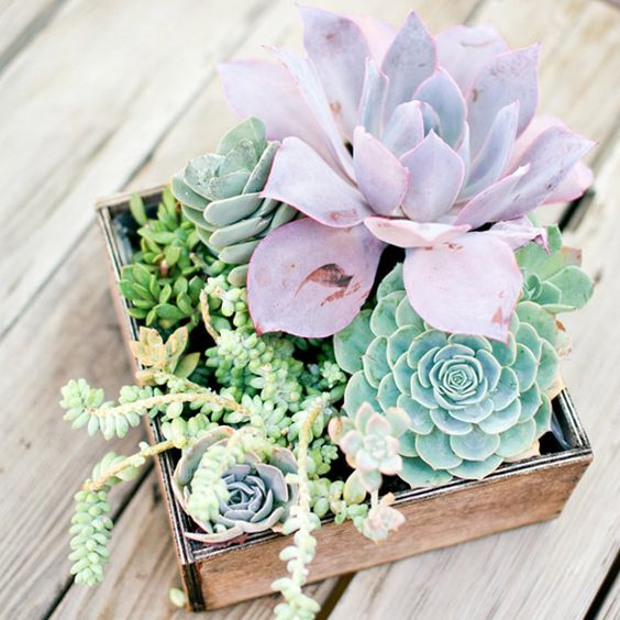 a box with different succulents in green and lilac is a very trendy solution to try