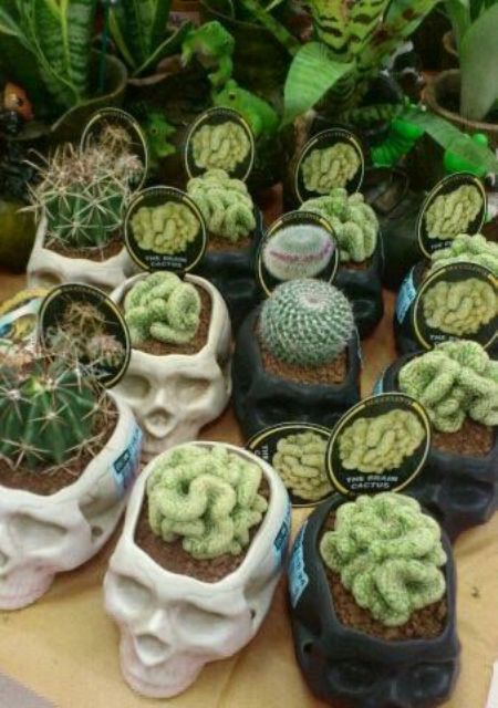human skull planters with cacti and succulents for wedding favors