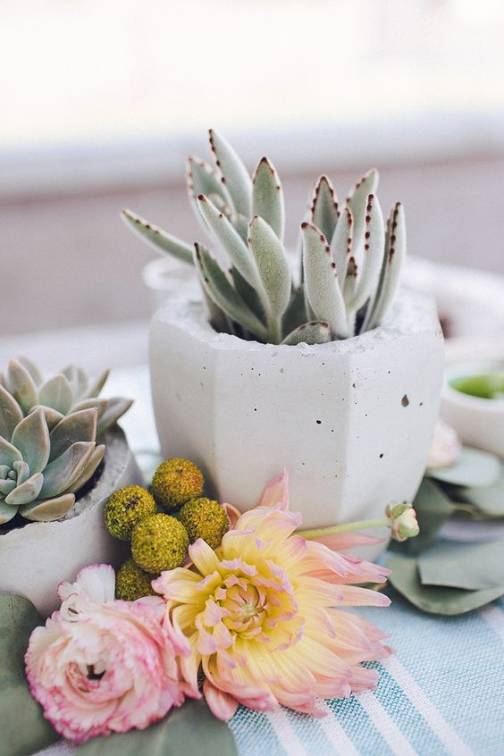 faceted white concrete planter with a succulent can be used for a cool centerpiece