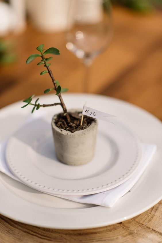 a small potted succulent in a concrete planter with a name for a favor and place card